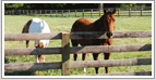 Virginia Horse Farms and Equestrian Properties