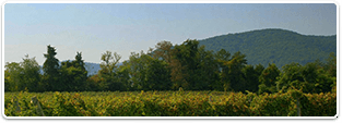 North Carolina Wineries for sale