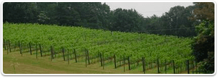 Richmond Vineyard Properties for sale