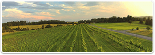 Shenandoah Valley Vineyard Properties for sale