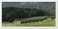 A Quick Guide to Buying a Vineyard