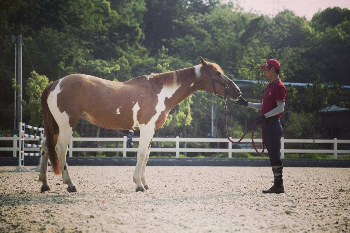The Cradle of American Equestrian Tradition