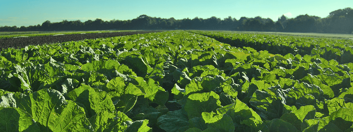 Organic Farming's Big Moment – Organic Foods Break $100 Billion in Sales