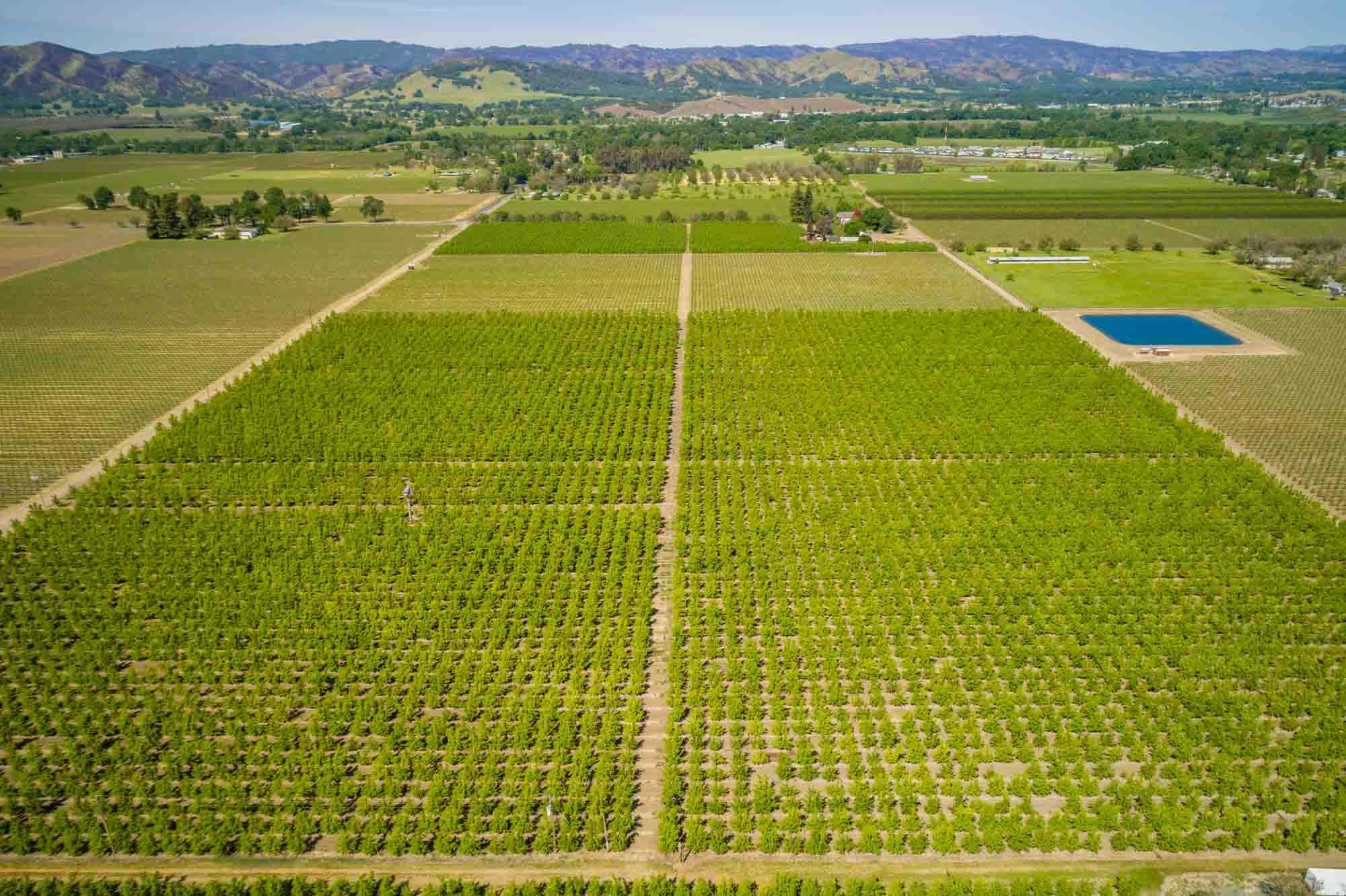 California, ,Vineyards,Commercial,1010015904 MLS # 1010015904