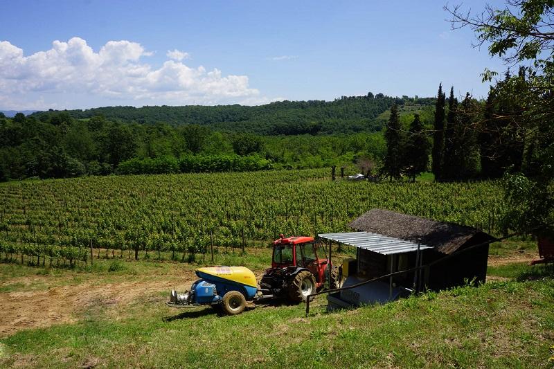 Vineyards,For sale,1010015972 MLS # 1010015972